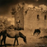 Horses and Church Ruin, Campeche