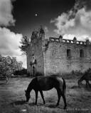 Horses and Church Ruin, Campeche