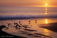 Laguna Beach, main beach, sunset, birds, surf