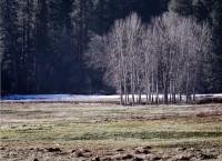 Yosemite, cottonwood, tree, pines, winter, Ahwahnee Meadow, Tom Jewett
