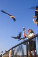 Laguna Beach, birds, Main Beach