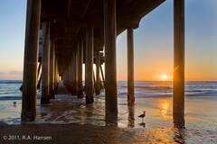 Coast 31