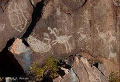 Little Petroglyph Canyon #20