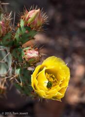 Still Life 5, Cactus flower