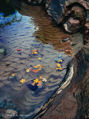 Zion Creek, Utah