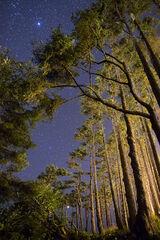 """Starry Night"", Olympic Park"