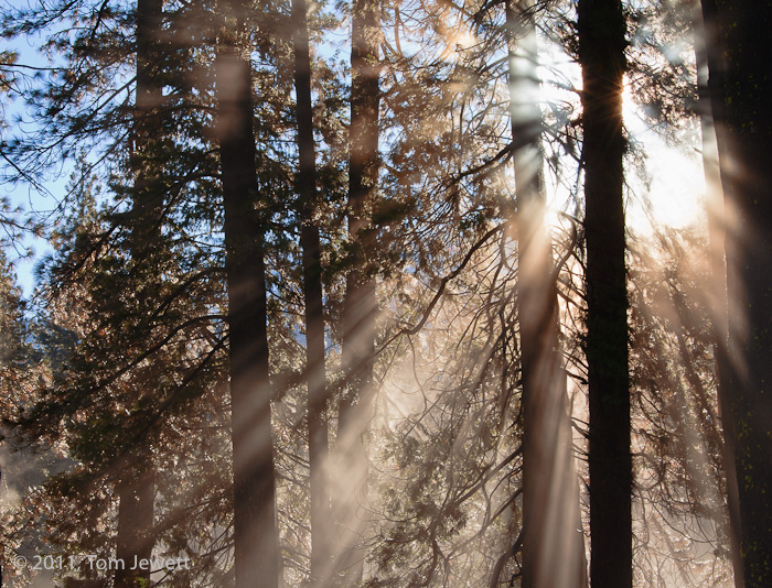 On a winter morning, the sun's rays provide at least visual warmth to this image taken at the edge of Ahwahnee Meadow near the...