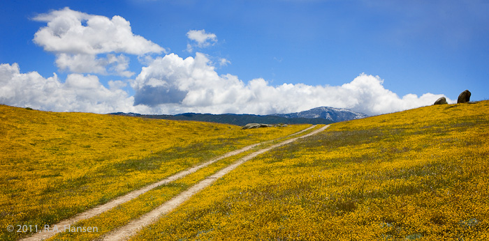 Two tire tracks are all that mark this road leading through a yellow field toward the rolling hills and clouds in the background...