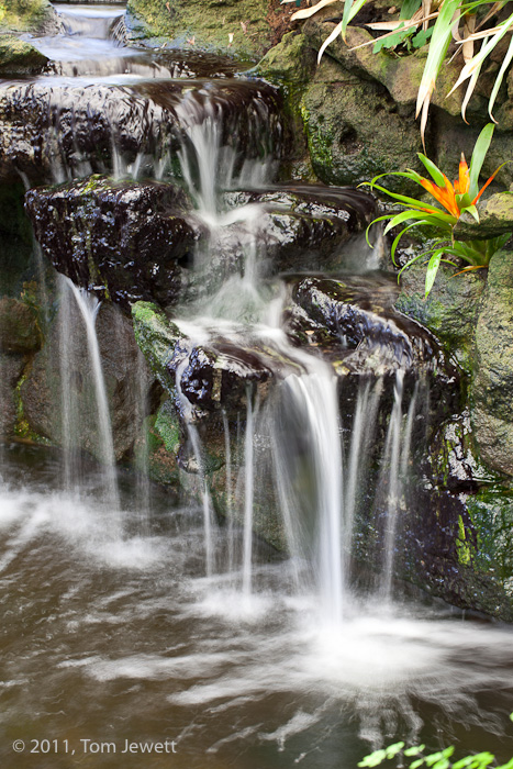 In a tropical-themed garden, this waterfall feeds a koi pond. Photo by Tom Jewett.